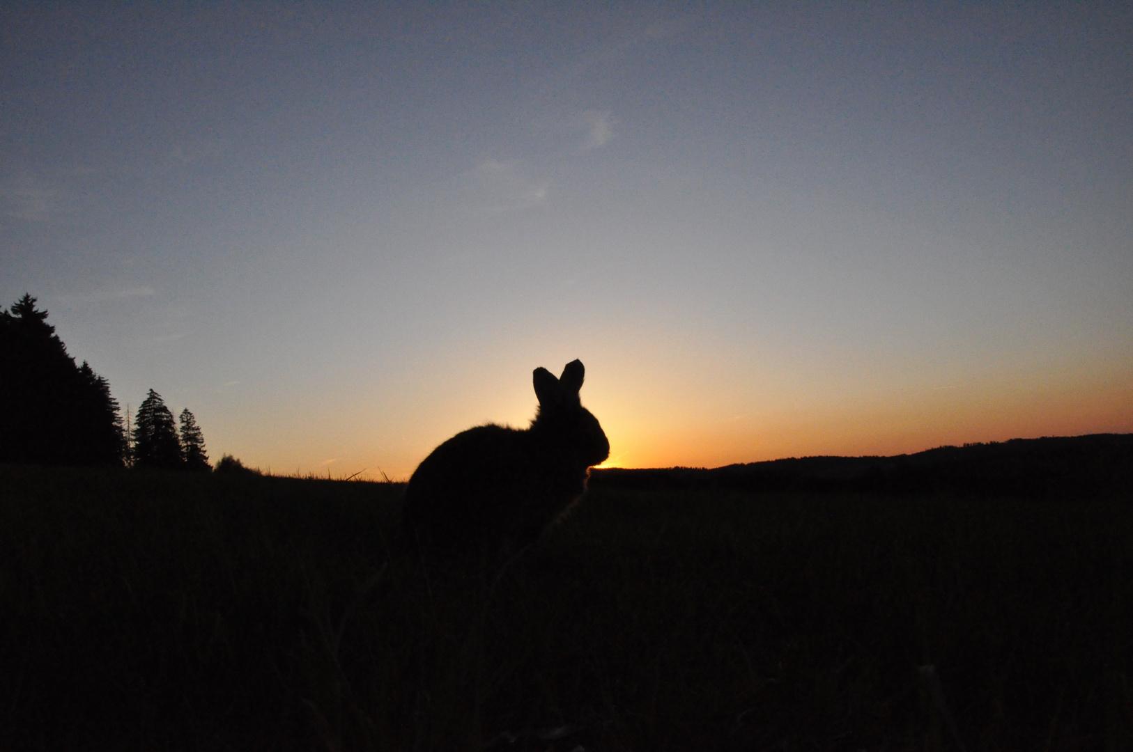 Bartkaninchen 37: Sonnenuntergang