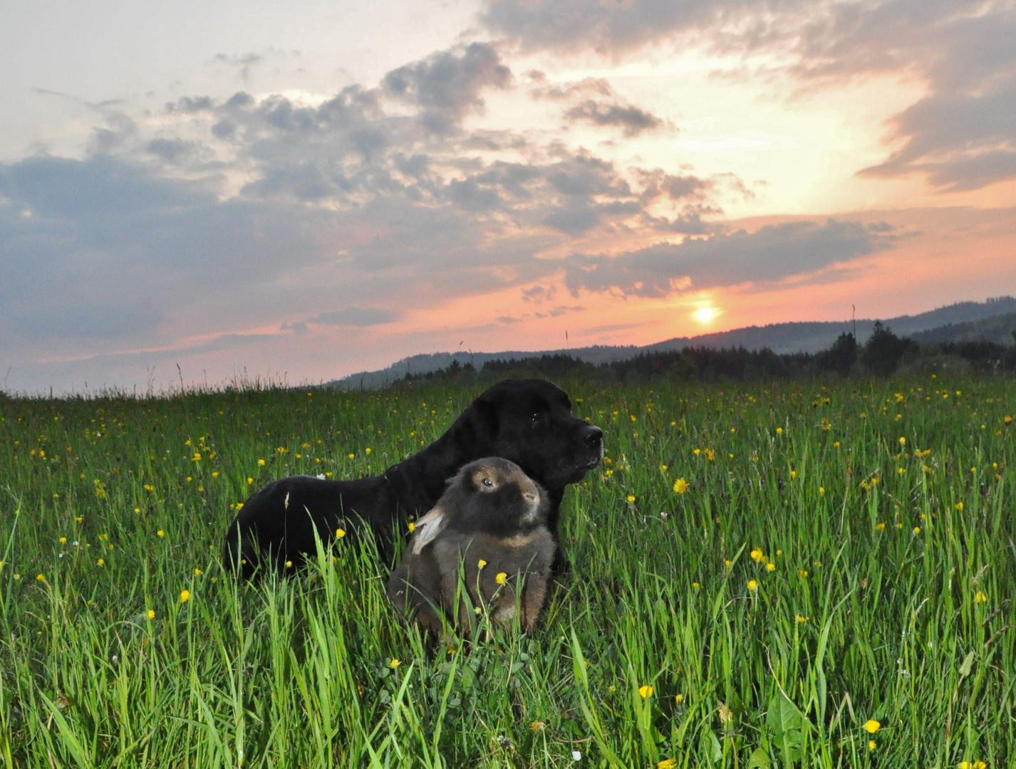 Bartkaninchen 38: Sonnenuntergang