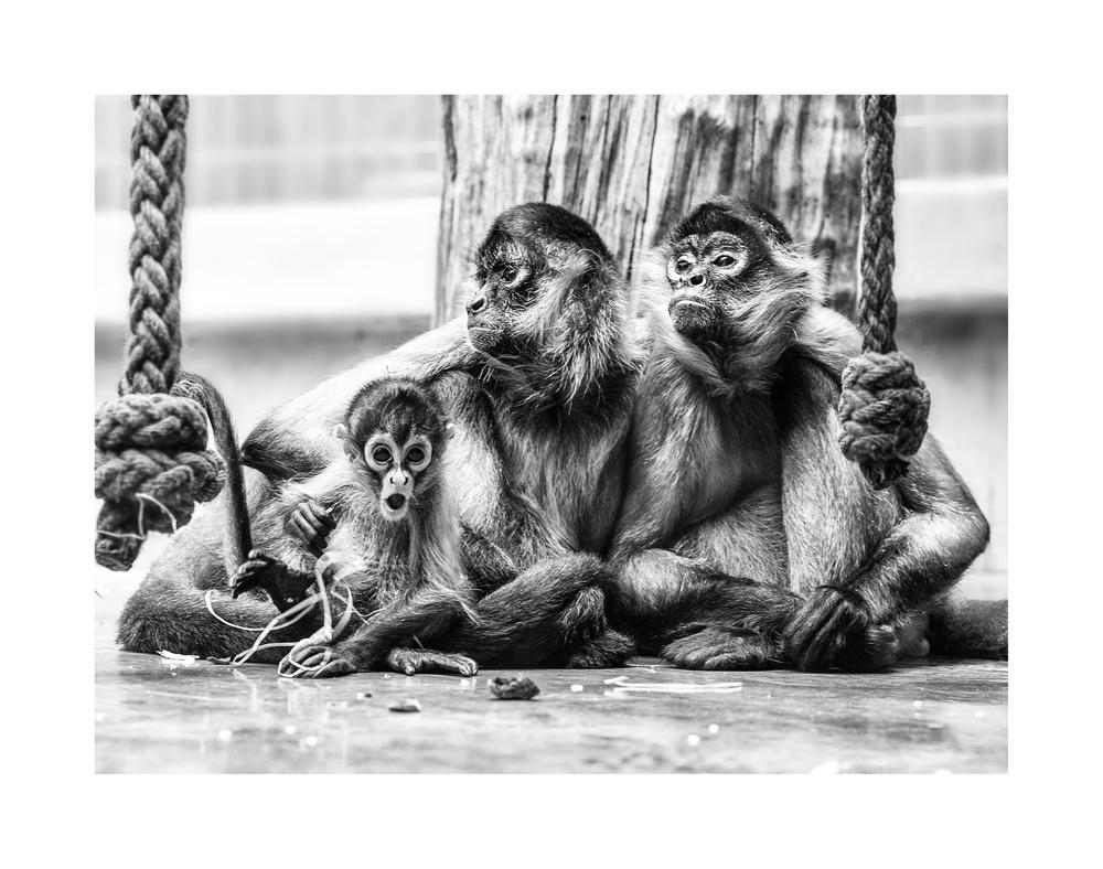 Basel Zoo 5