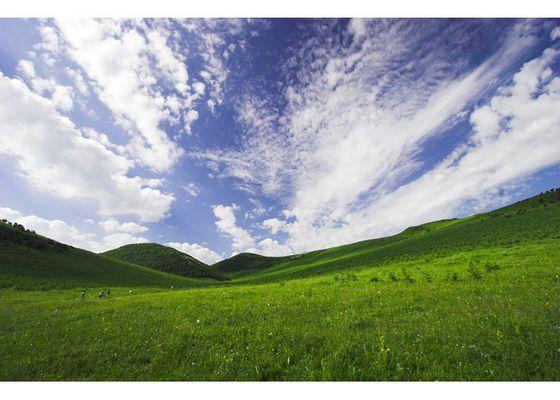Bashang Grassland
