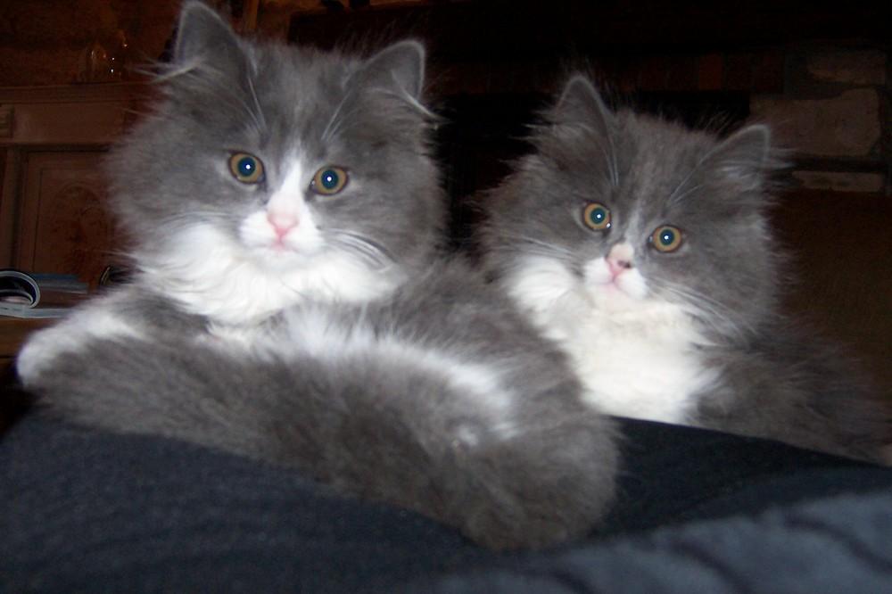Basile et Betty