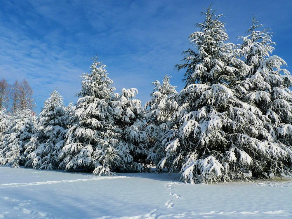 Basler Winter  3