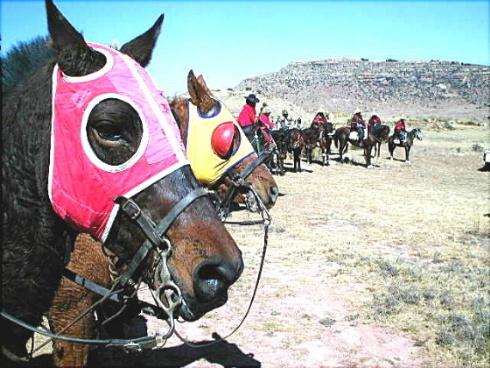 Basotho Ponies