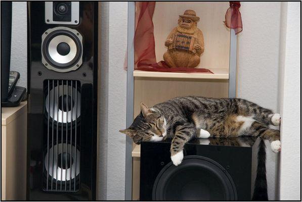 Bass, Beats & Cat