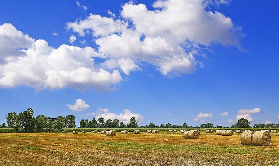 bassa bresciana foto immagini paesaggi campagna