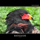 BATELEUR