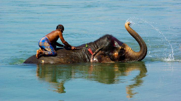 Bath of the elephant - panoramic