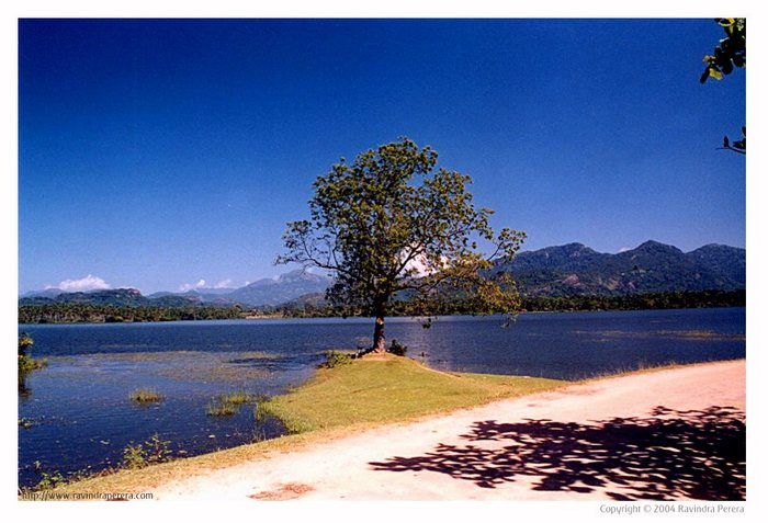 Bathaleagoda Lake in Kurunagala, Sri Lanka