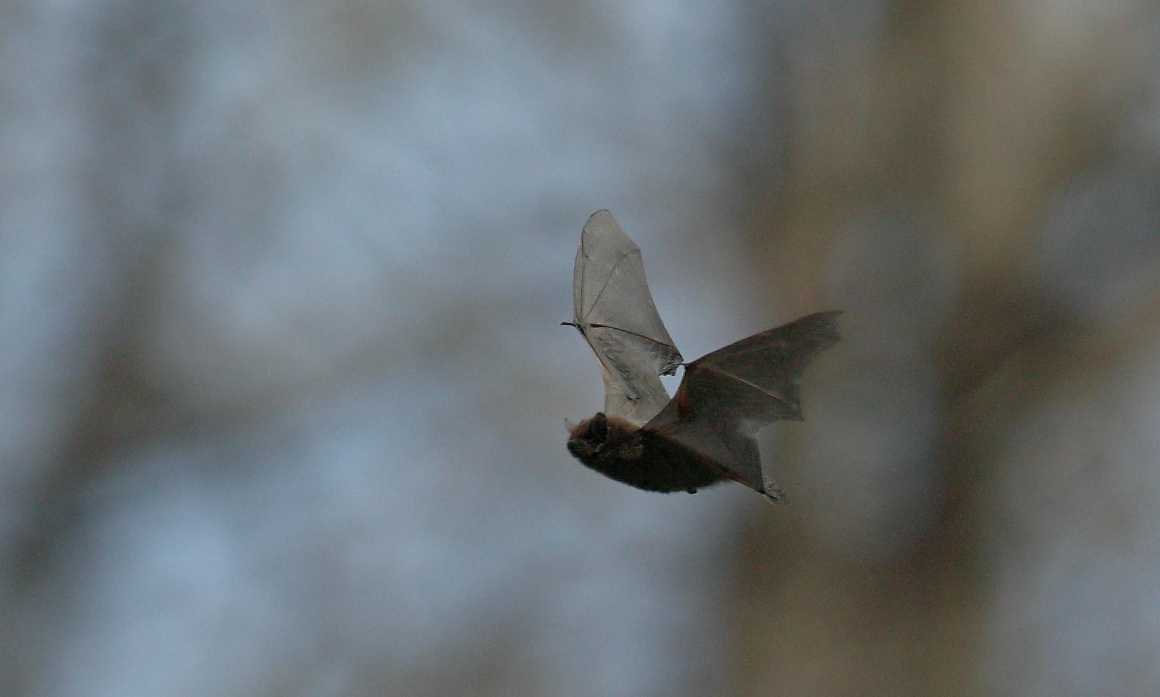 Batmen