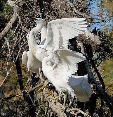 Battements d'ailes .......