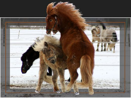 battle horses