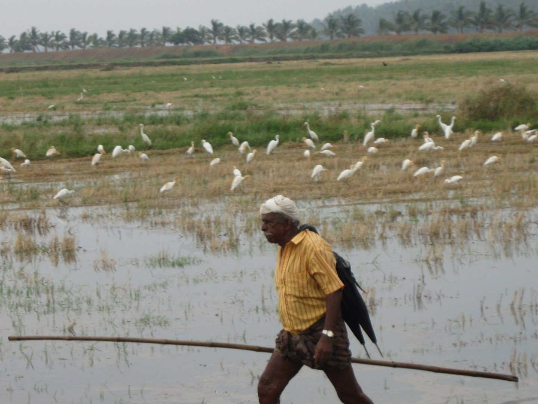 Bauer auf dem Felde