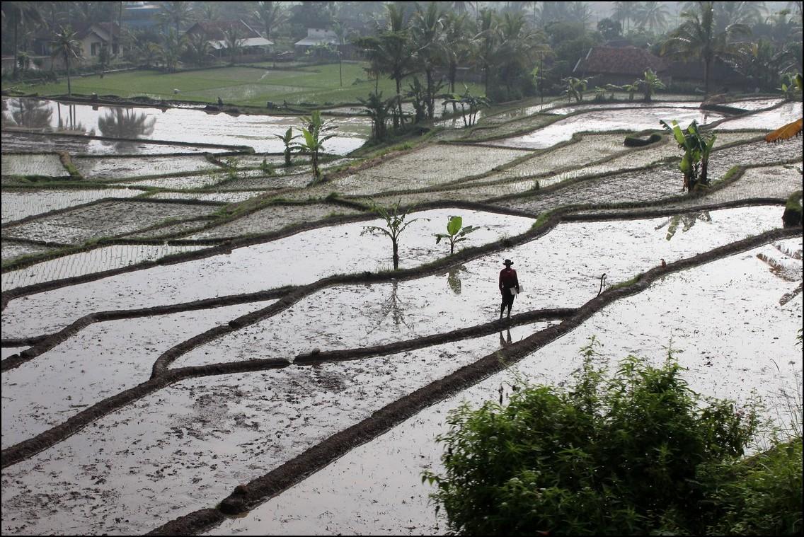 Bauer auf Reisfeld in Indonesien
