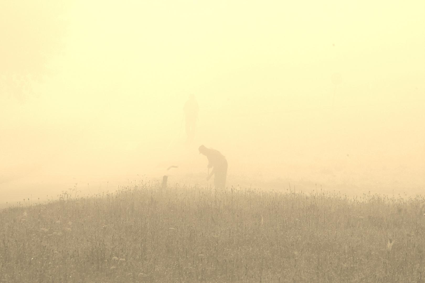Bauer im Morgennebel