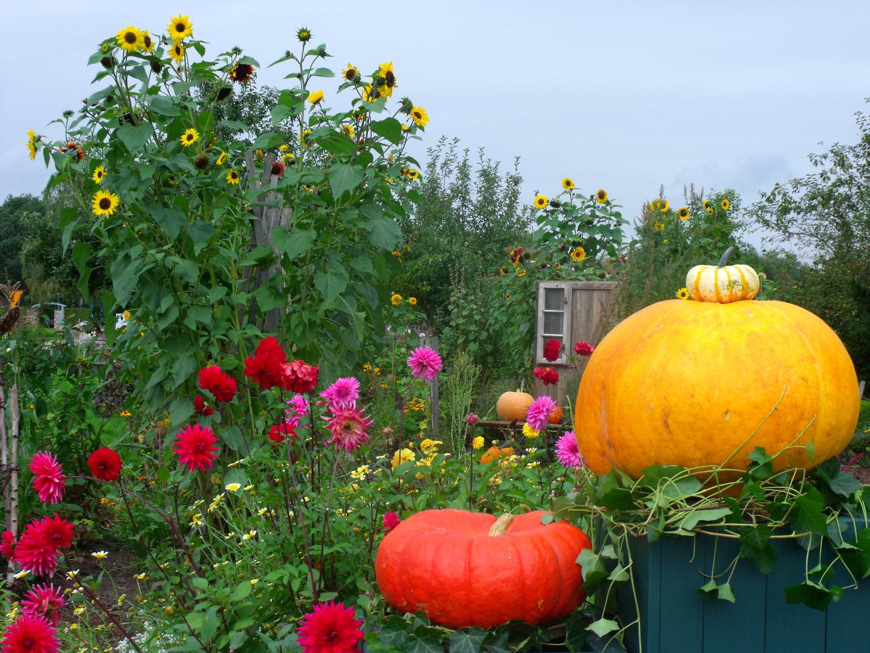 Bauerngarten im Herbst