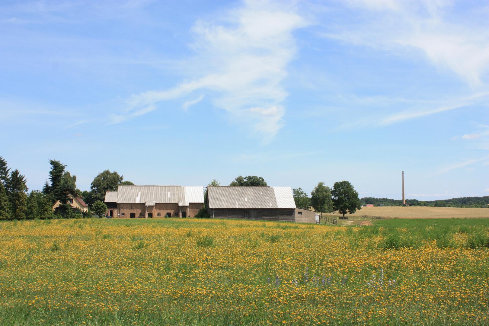 Bauernhof mit gelber Wiese