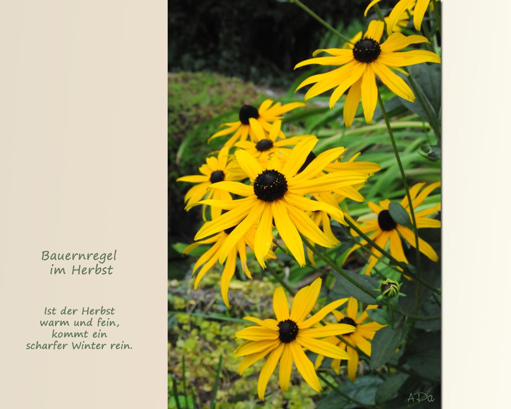 Bauernregeln im Herbst (2)