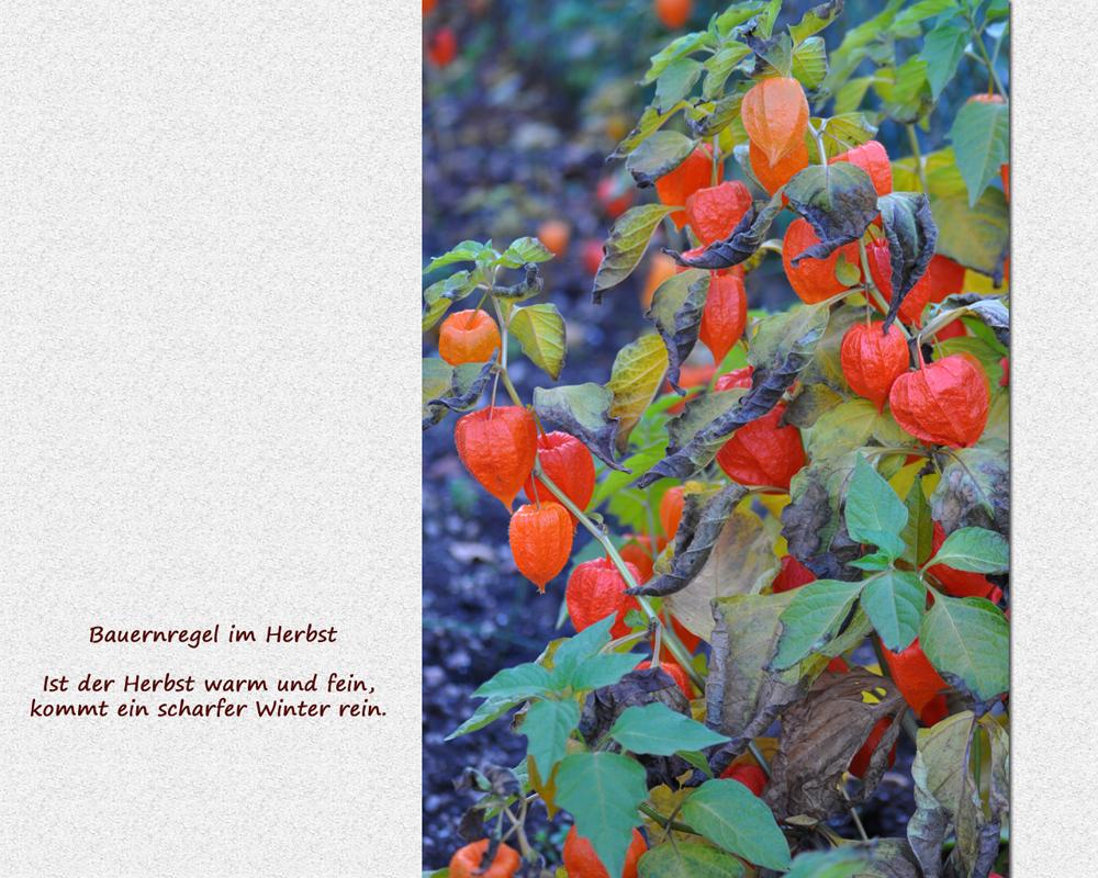 Bauernregeln im Herbst (7)