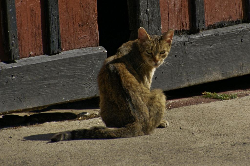 Bauers Katze