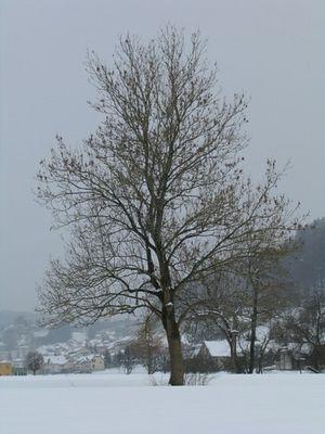 Baum 07