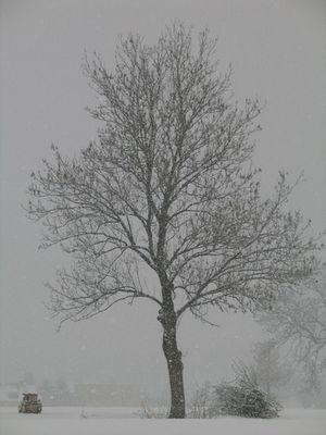 Baum 09