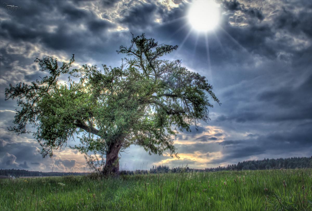 Baum ;-)