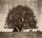 Baum-1