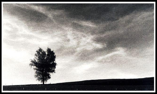 Baum 12