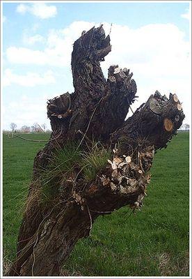 Baum #2