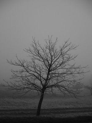 ...Baum...