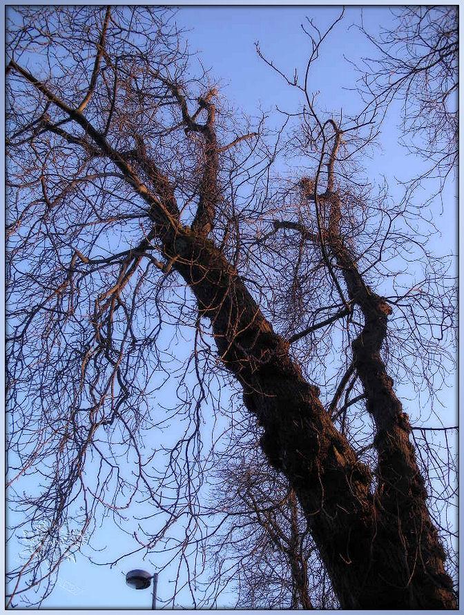 Baum,............