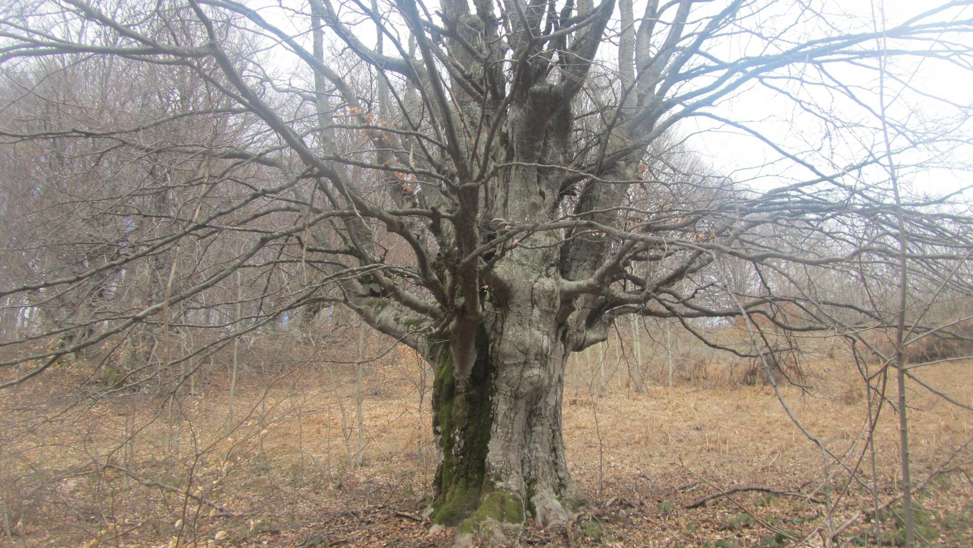 Baum!