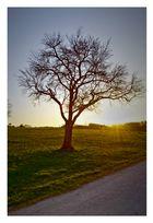 Baum :)