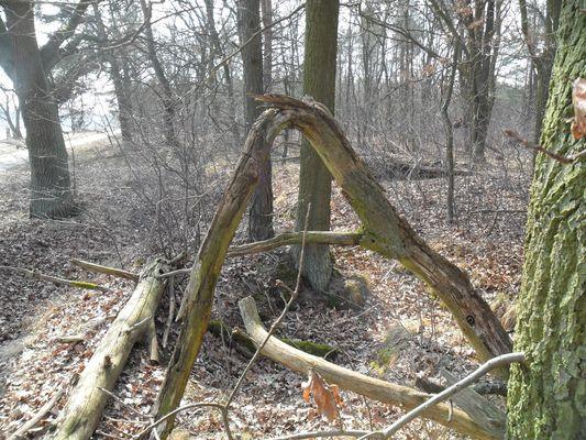 Baum / A
