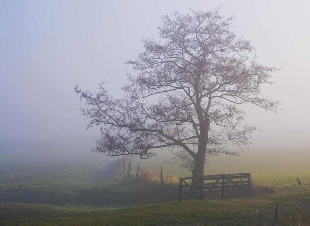 Baum a´la Hamilton