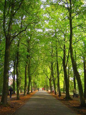 Baum-Allee