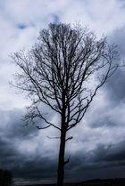 Baum alleine im Schlachtfeld
