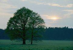 Baum am Abend