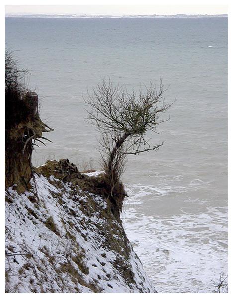 Baum am Abgrund