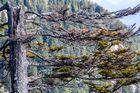 Baum am Berg
