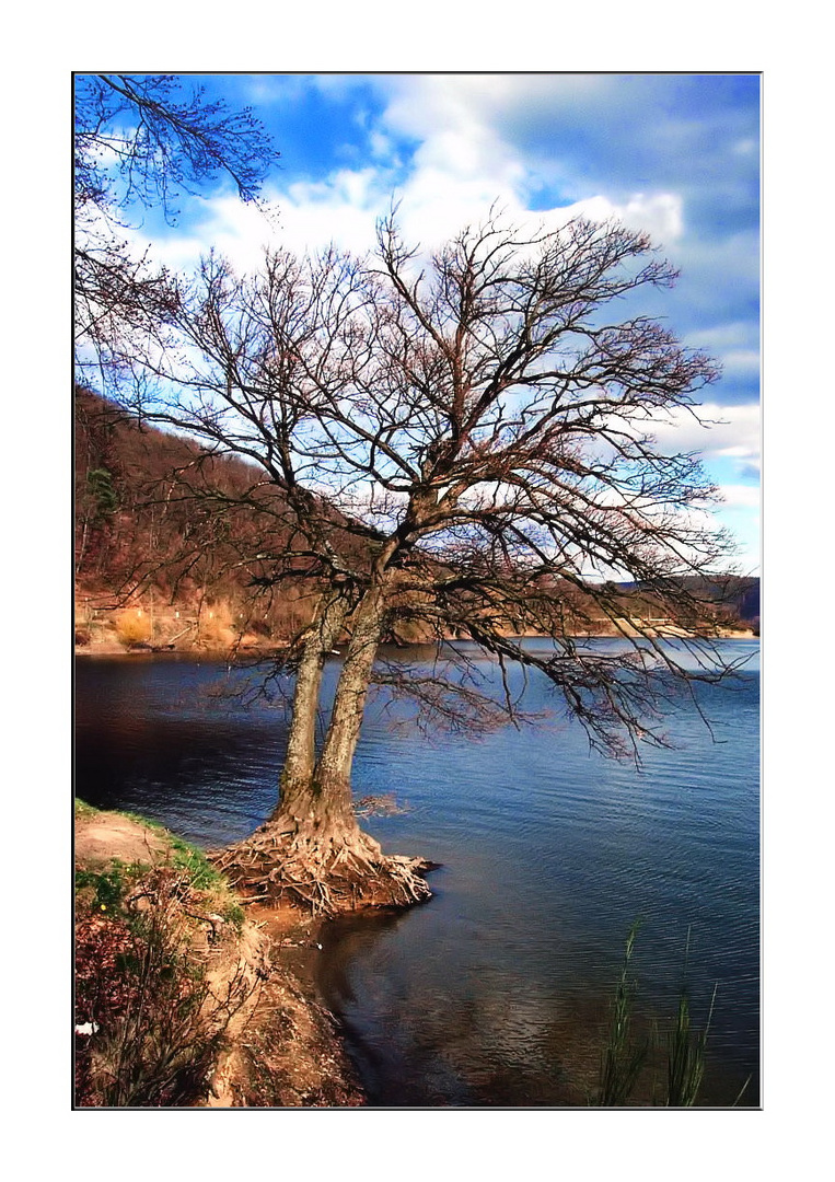 Baum am Edersee Bericher Bucht 1
