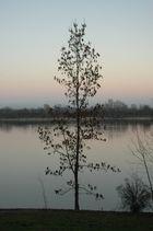 Baum am Fidschi (See bei München)