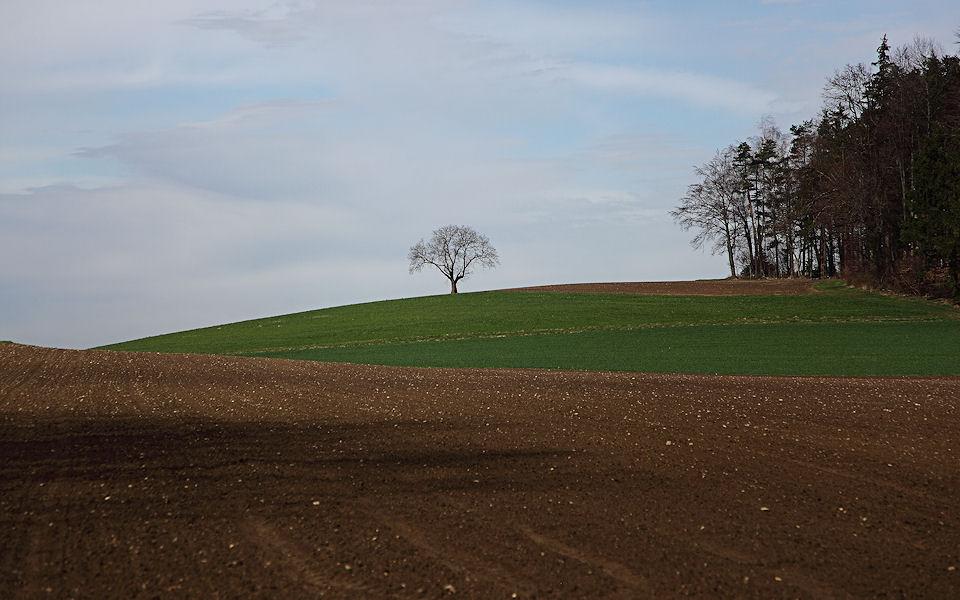 Baum am Horizont