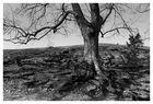 Baum am Ipf