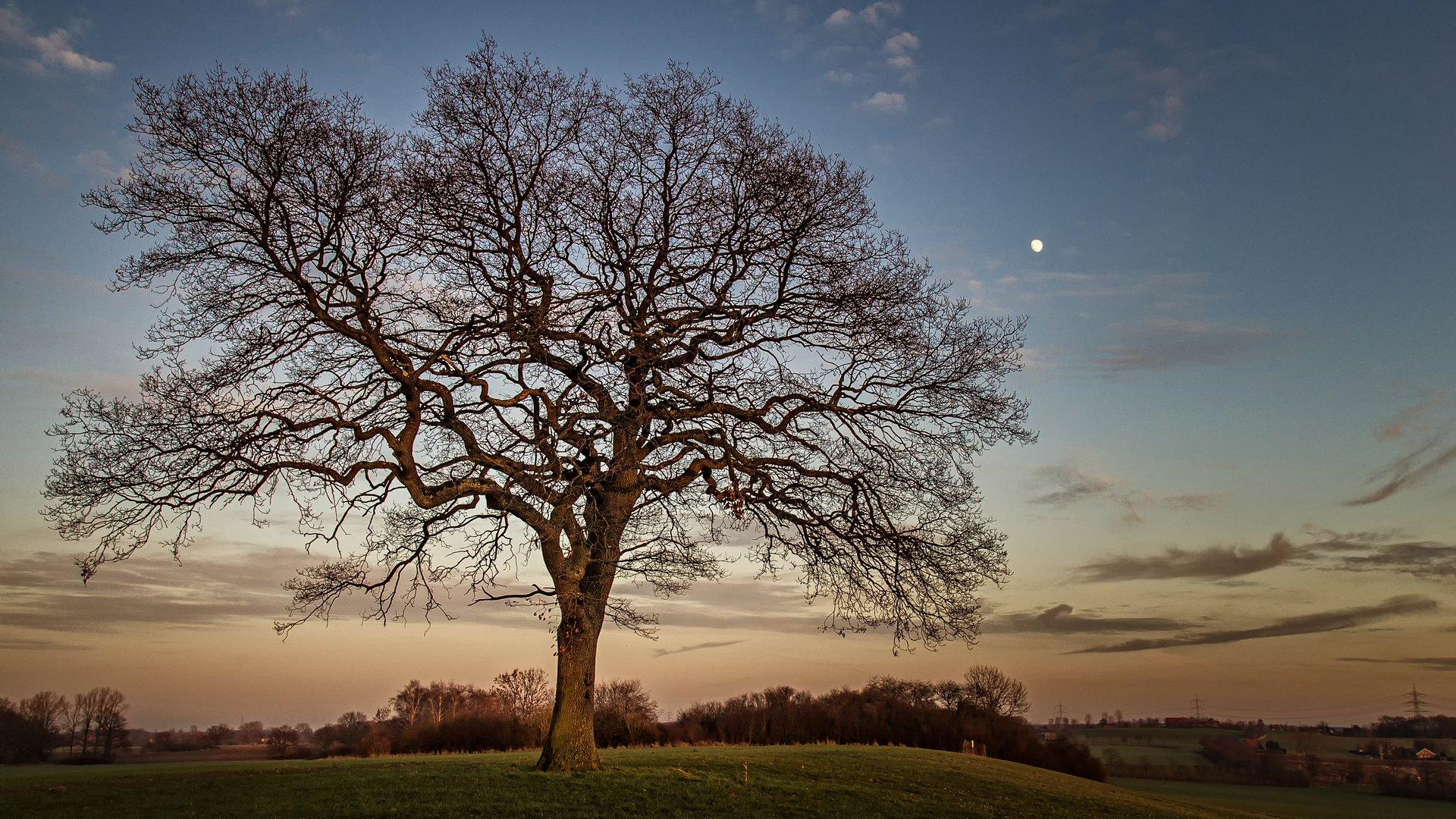 Baum am Kurricker Berg