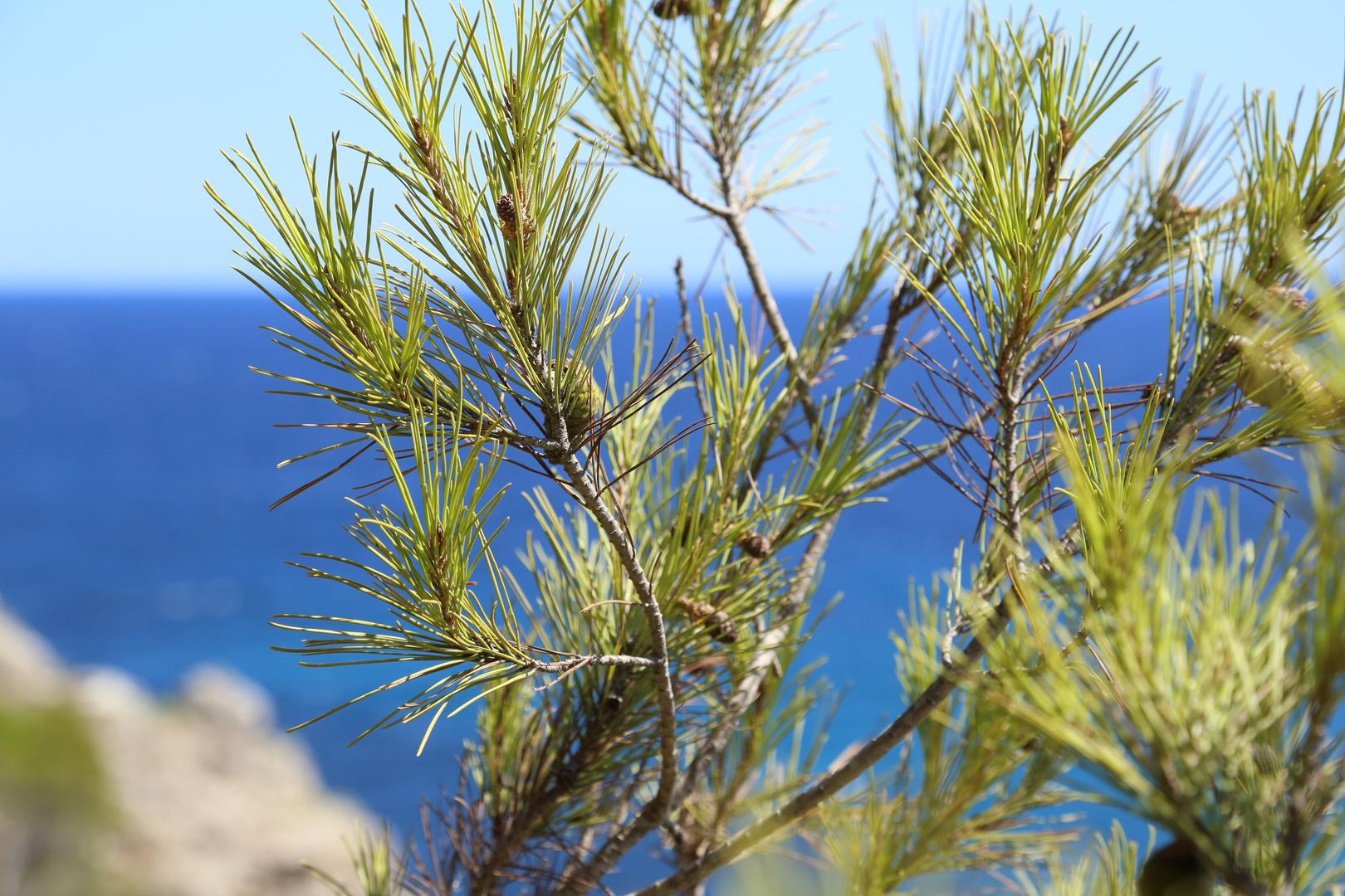 Baum am Meer (2)