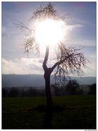 Baum am Mittag