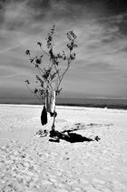 Baum am Ostsee