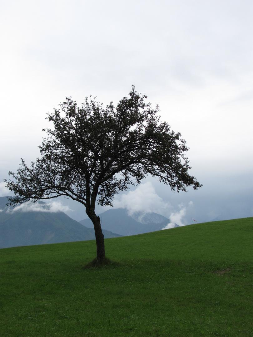 Baum am Radsberg