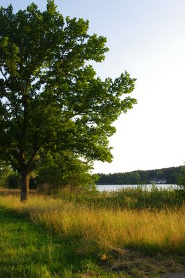 Baum am See